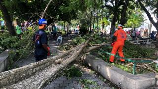 Les brigadiers de la Protection Civile débloquent des tronçons de routes, rues et espaces publics suite au passage de la tempête Laura le 23 août 2020. Photo prise dans le département du Sud, Haïti le 24/08/2020 - Protection Civile Locale (DGPC)